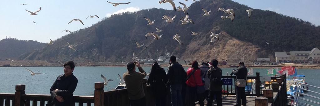 Seagulls at the the Tiger Beach water park in Dalian