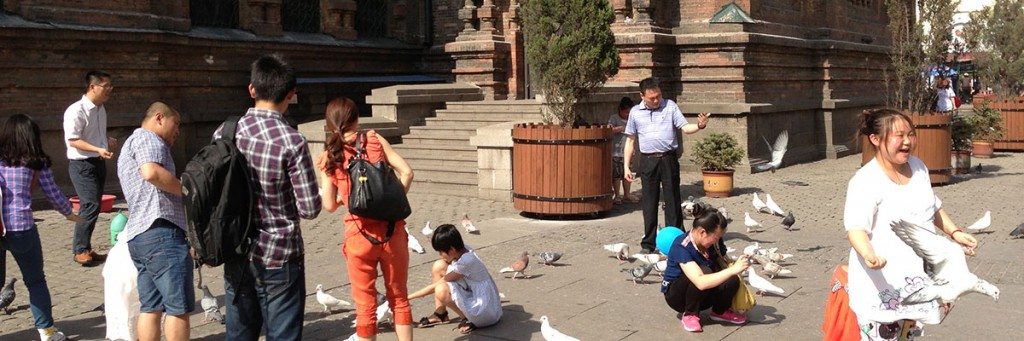 Pigeons outside St. Sophia Cathedral in Harbin